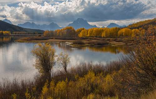 Grand Teton National Park, Oxbow Bend, Aspen, Fall Color